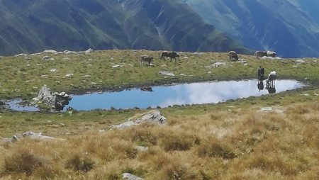 Bando Operazione 6.4.1 – Creazione e sviluppo di attività extra-agricole per agriturismi esistenti (Turismo sostenibile)