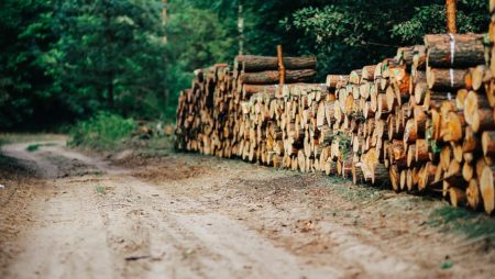 """Graduatoria finale Bando Operazione 8.6.1 – """"Investimenti per incrementare il potenziale economico delle foreste e dei prodotti forestali"""" – Ambito: Filiere produttive"""